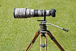 500mm Nikkor on Miller Tripod